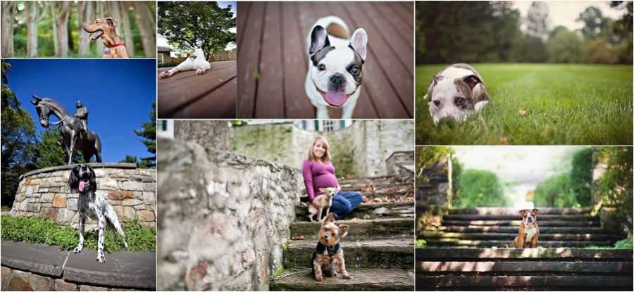 pet photographer in philadelphia